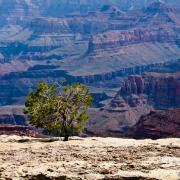 Grand Canyon Series